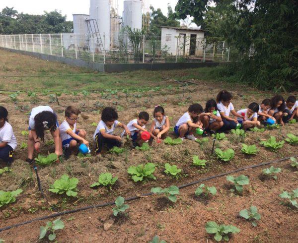 Educação Nutricional - Horta Sesc Ler Goiana